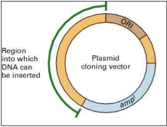 plasmid.jpg