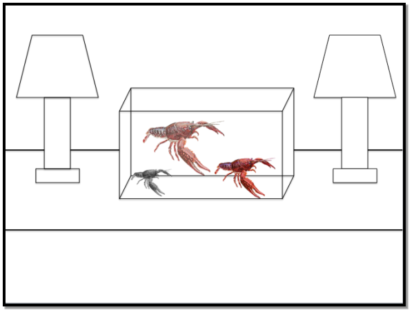 Behaviors Of The Red Swamp Crayfish Procambarus Clarkii
