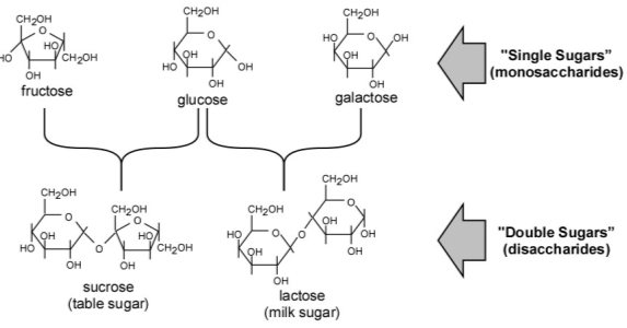 rate of reactions of yeast and glucose, yeast and sucrose, and yeast and lactose essay Sucrose, maltose, lactose, all with the general formula c12h22o11  the  change in the respiration rate of yeast would occur due to the additional  glycosidic  by placing the yeast-sugar solution in the water bath for the entirety  of the reaction.