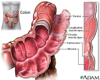http://159.178.78.102/GI_Colorectal/images/layers.jpg
