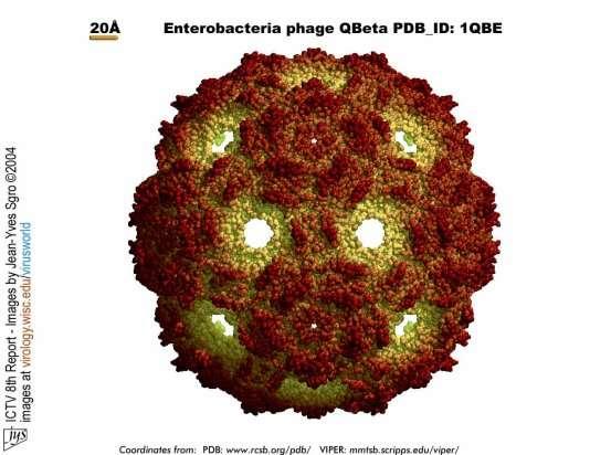 Enterobacteria Phage Qbeta