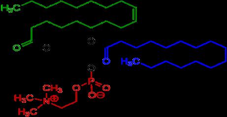 File:1-Oleoyl-2-almitoyl-phosphatidylcholine Structural Formulae V.1.png