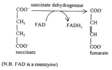 http://www.lungtp.com/enzymes/pic1_e_bfp04.jpg