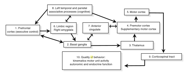 Neurobiological Model
