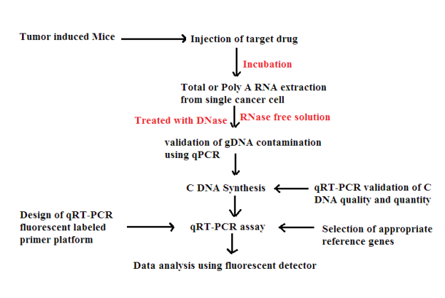 C:\Users\User\Desktop\RDNA FINAL ASSIGNMENT\transcription factor quantification.png