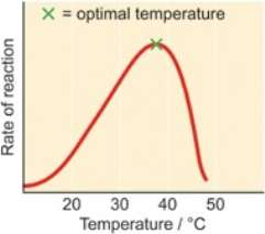 Graph of enzyme activity verses temperature
