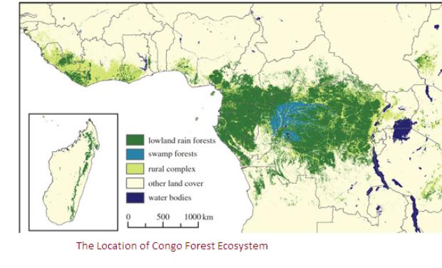 congo rainforest food web