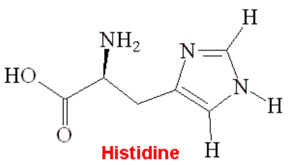 histidine synthesis an overview of research Biological systems offer insights into approaches to the problems encountered in the synthesis of nanomaterials histidine-rich proteins have been implicated in the biomineralization of heme, copper, and zinc.