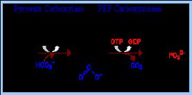 http://www.rpi.edu/dept/bcbp/molbiochem/MBWeb/mb1/part2/images/pyrpep.gif