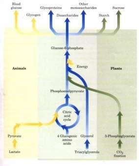 http://www.bioinfo.org.cn/book/biochemistry/chapt19/599.jpg