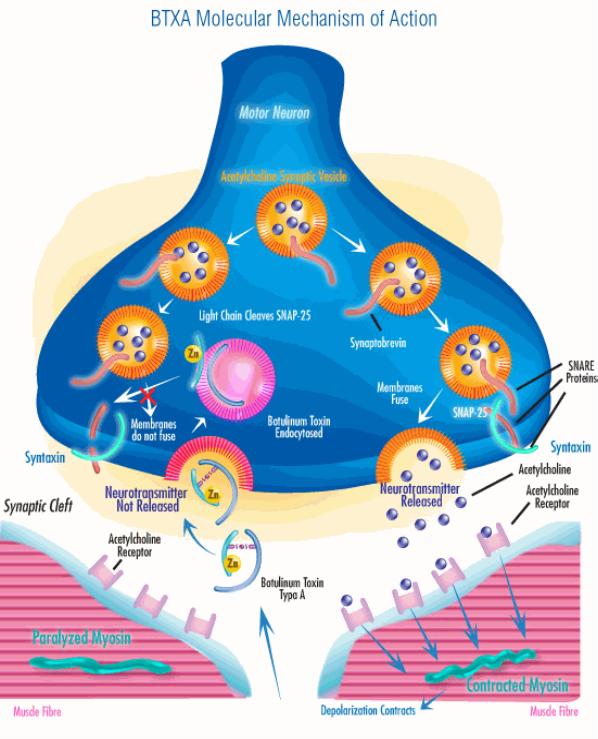 D:\Assignment\Biology\Sem2\btxa_com_20150208_210926.gif