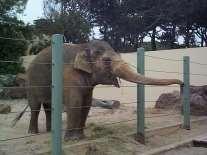 http://www.saidaonline.com/en/newsgfx/elephant%20in%20zoo-saidaonline.jpg