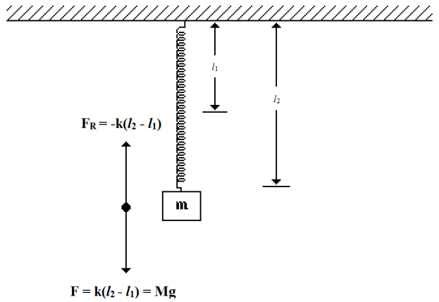 Elasticity Experiment Application Of Hooke S Law