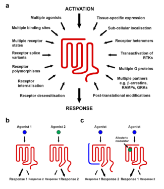 Factors influencing GPCR signalling pathway