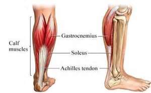 achilles tendon Images and Graphics