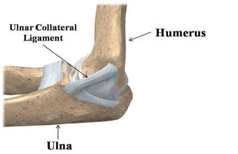 ulnar collateral ligament Ulnar Collateral Ligament