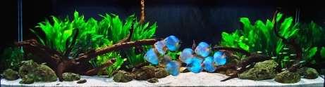 http://www.aquariumdesigngroup.com/data/photos/43_1aquarium_discustank_fishtank.jpg