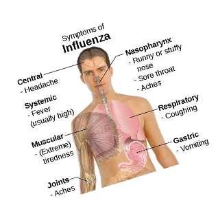 http://www.rugusavay.com/wp-content/uploads/2013/08/influenza.jpg