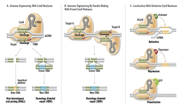 C:\Documents and Settings\abc\Desktop\FA_Cas9_Fig2_Cas9forGenomeEditing.png