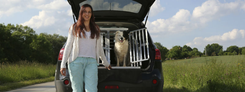 Fahrzeugspezifische Hundeboxen