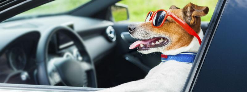 Tag hunden sikkert med i bilen