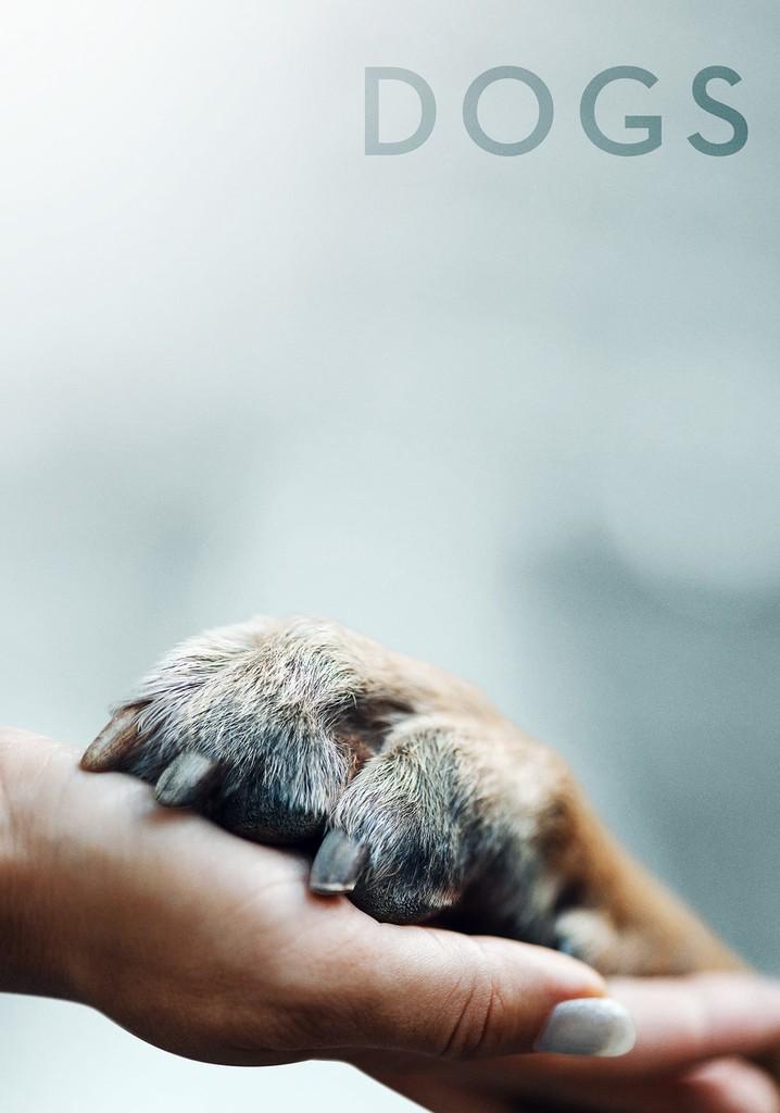 Amigos Caninos