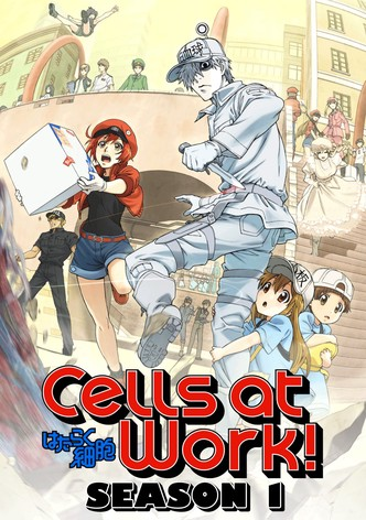 Cells at work