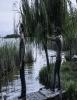 estreno  El Silencio del Pantano