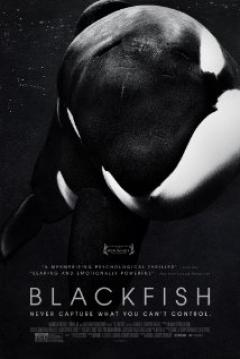 Poster Blackfish