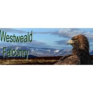 Westweald Falconry