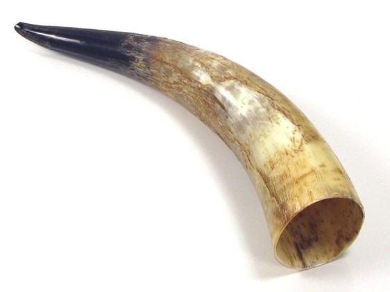 Rough Polished Horn - 20""