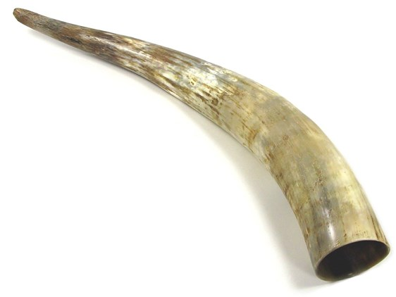 Rough Polished Horn