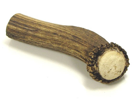 Stag Antler Handle - Crown
