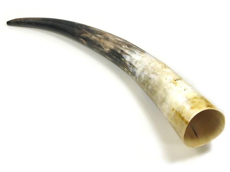 """Polished Horn - 20"""""""