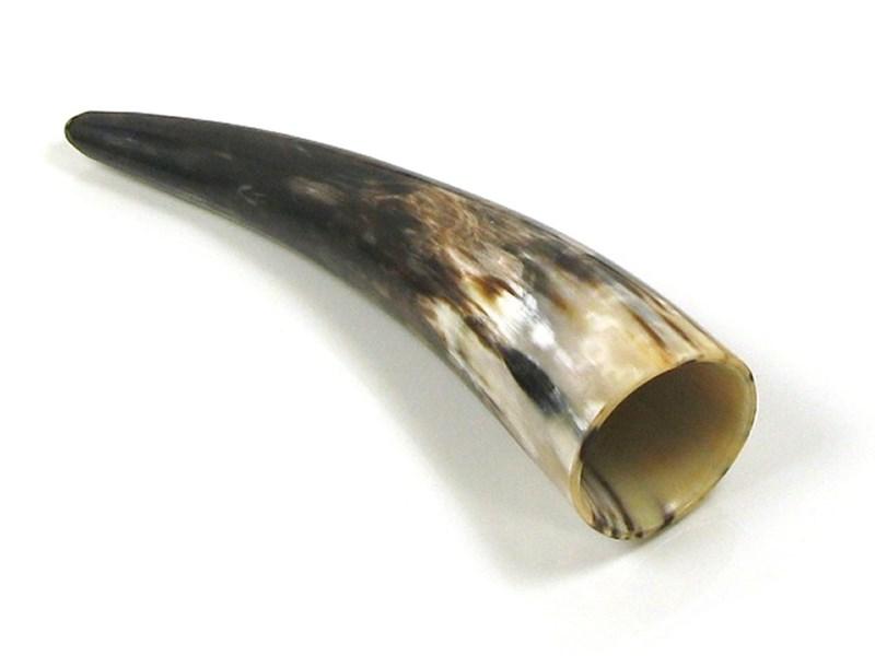 """Polished Horn - 8"""""""