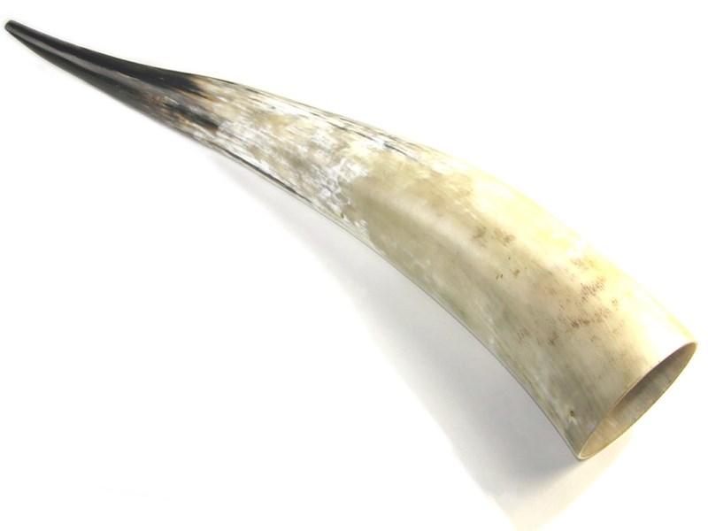 """Polished Horn - Extra Large - 30"""""""