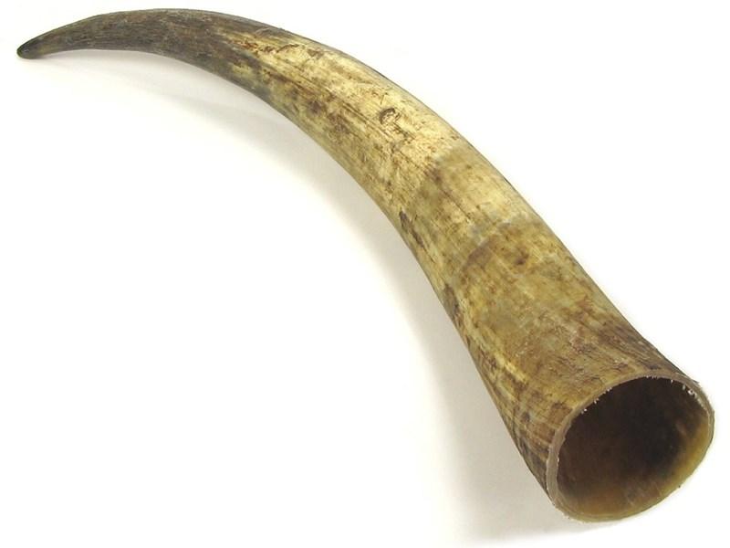 """Raw Horn - 25"""""""