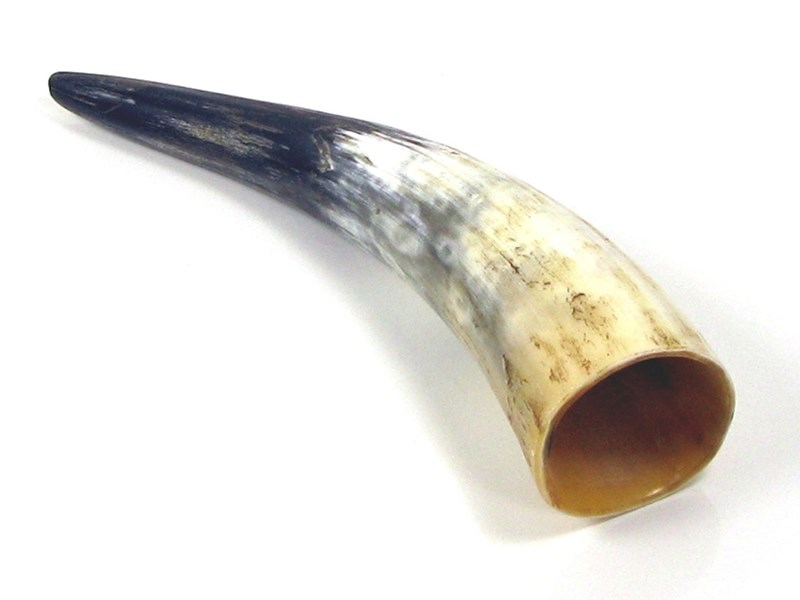 "15"" Rough Polished Horn"