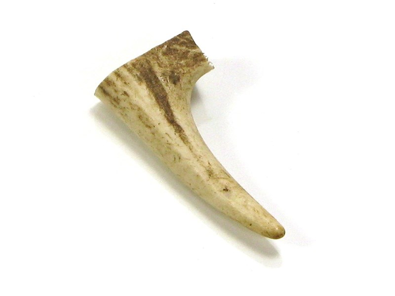 Stag Antler Tynes - Small