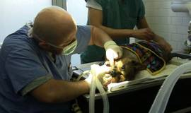 Thumb doggie dental?1474881883