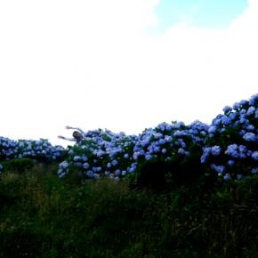 Flores Corvo 32