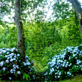 Flores Corvo 14
