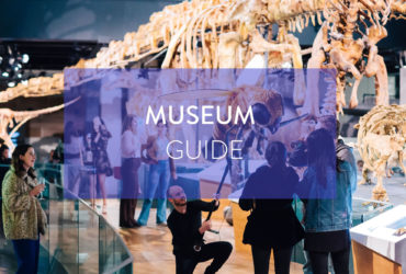 Unconventional Museum Visits - Melbourne Museum Guide