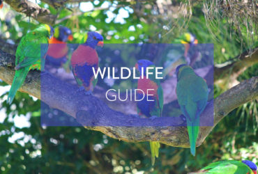 Wild Encounters In The City - Melbourne Wildlife Guide