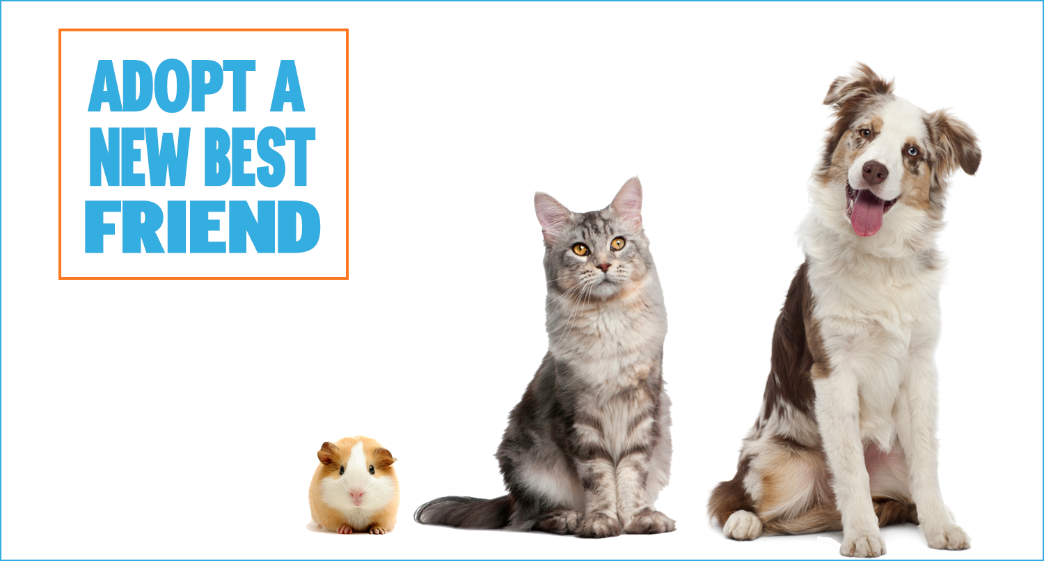 Adopt A Pet Irelands largest pet adoption website