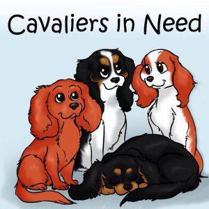 Cavaliers In Need Northern Ireland