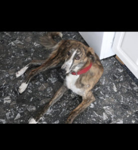 Dog Angels Ireland, Rescue at TAGS