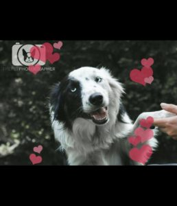 Rescue Dogs for adoption - TAGS Ireland's Largest Pet Adoption Website