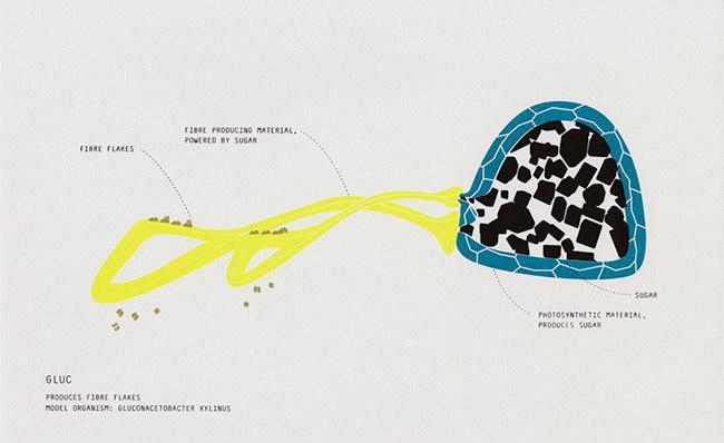bioplastic fantastic, ltvs, johanna schmeer, lancia trendvisions