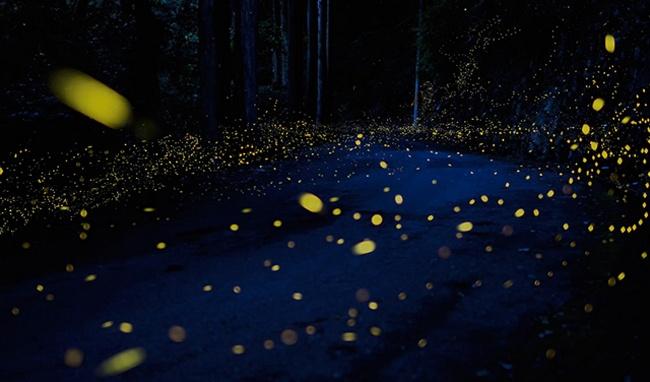 tsuneaki hiramatsu, firefly, ltvs, lancia trendvisions